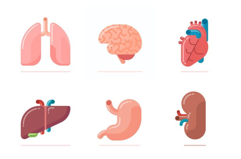 Coeur, vaisseaux, reins, cerveau… le Covid-19 frappe là où on ne l'attendait pas