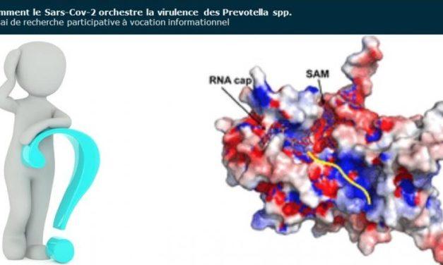 Comment le Sars-Cov-2 orchestre la virulence des Prevotella spp.